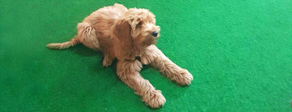Basiscursus gehoorzaamheid - Hondenschool DoggyDoe